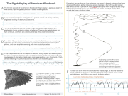 American_Woodcock_displayguide