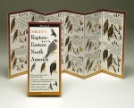 New Folding Guides to birds