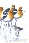 Print to support shorebird habitat preservation