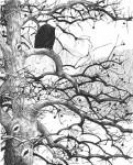 Bald_Eagle_print