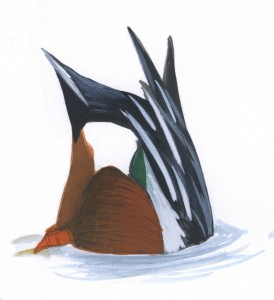 Duck_quiz6