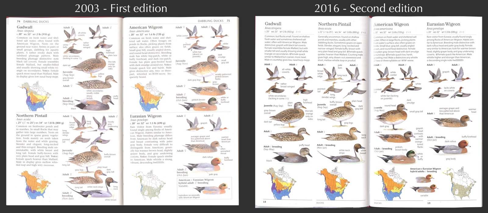10,000 birds the sibley guide to birds, second edition: a review.