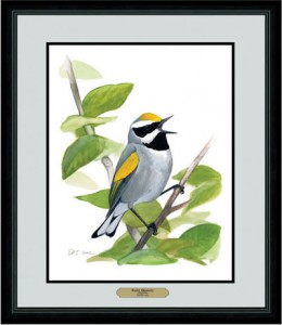 Golden-winged Warbler print available from Bird Watcher's Digest