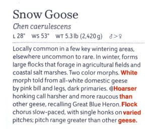 A scan of the Snow Goose text from page 9 of the Western Guide, with missing words added in red.