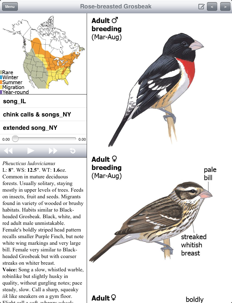Image result for rose-breasted grosbeak sibley