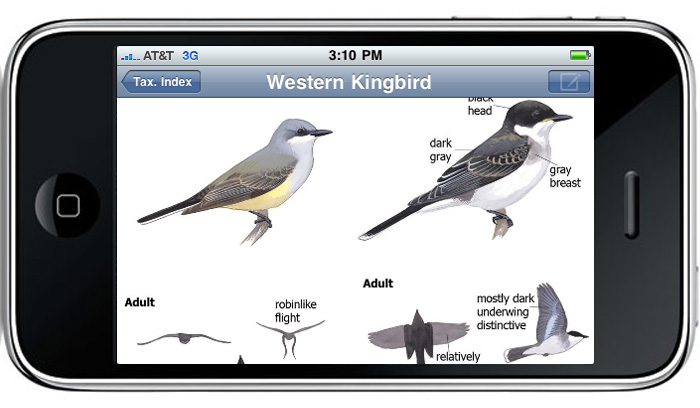 The Sibley eGuide to Birds App - Sibley Guides