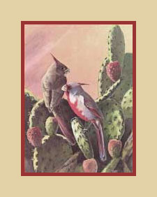 Pyrrhuloxia print available from Bird Watcher's Digest
